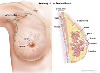 Breast Cancer Trtmn
